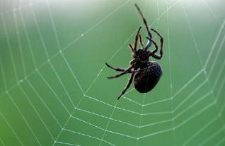 紅眼蜘蛛風水
