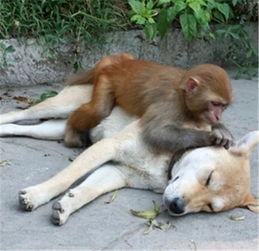 梦到狗是什么意思风水运势