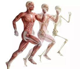 功能解剖——人体各关节运动的主要作用肌,快收藏  关节各部分及作用