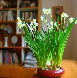 室内养花是什么修养