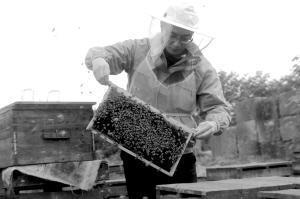 关于养蜂人的诗句