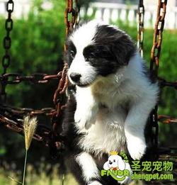 狗狗寄生虫病的诊断和治疗