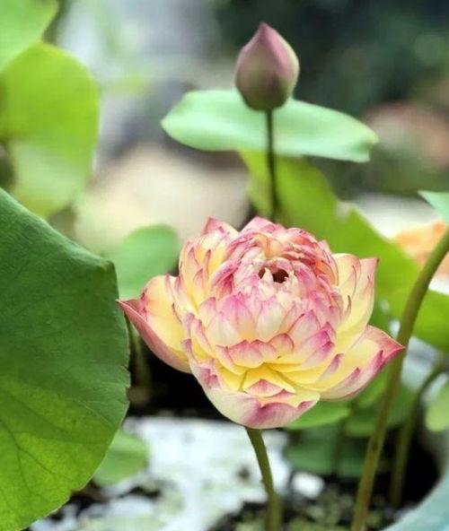 气温高养花