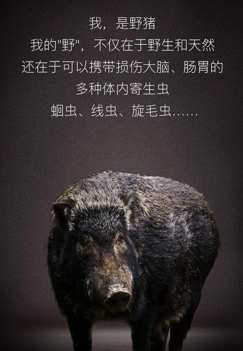 今天,世界野生动植物日听听野生动物的独白