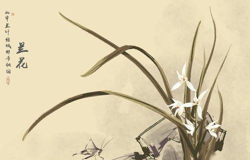 关于开花的诗句