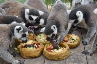 深圳野生动物园腊八大餐犒劳小动物