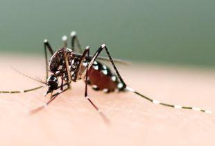 怎样防止被蚊子咬