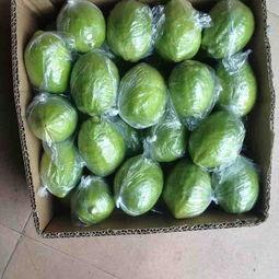 香水柠檬 2.7 3.2两价格2.8元 斤 30斤起批 惠农网