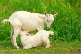 关于羊跪乳的诗句