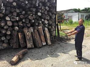 这批被盗的非洲黄花梨原木,全部被追回.