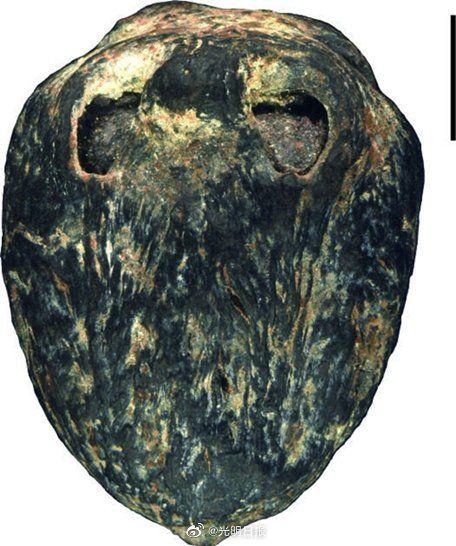 1500万年前的木乃伊南酸枣化石.(