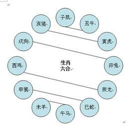 十二生肖相生相克图表