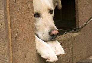 你支持反虐待动物法的议案么