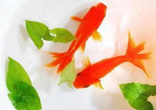 赞美小金鱼的四字词语
