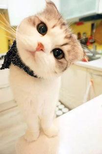 表情 可爱的小猫猫带着一副馋馋的表情围过来 新闻频道 手机搜狐 表情