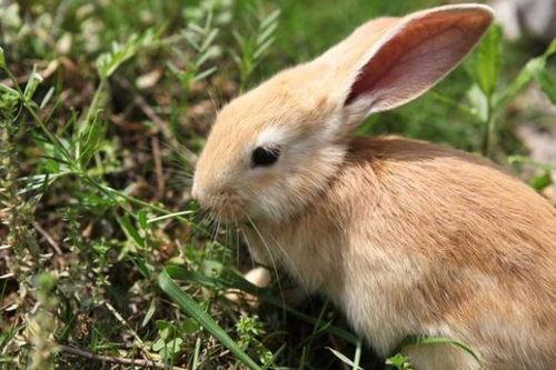 关于兔的诗句