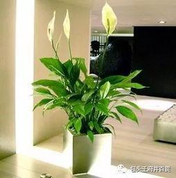 家里养花环境