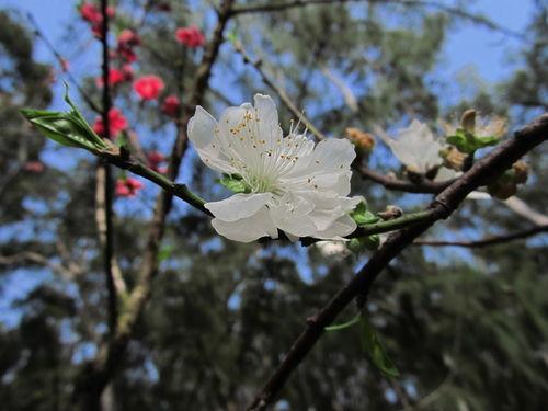 关于春花雨的诗句
