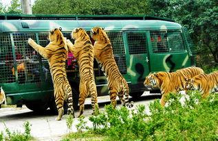 野生动物园】: