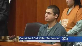 这名男子最终因为虐猫和性侵动物而
