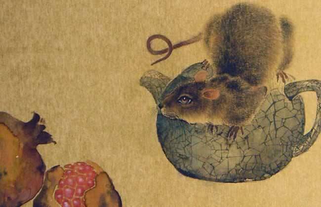 属鼠为什么不能兔相配