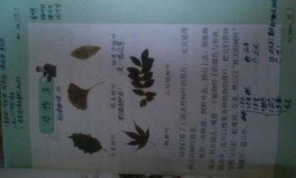 关于写秋天的树叶作文开头结尾