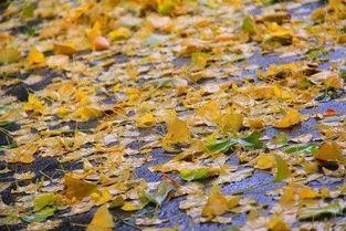 描写秋雨味道的作文600字
