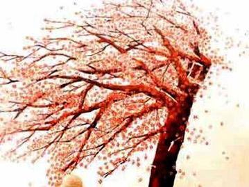 有关枫叶颜色的诗句古诗词