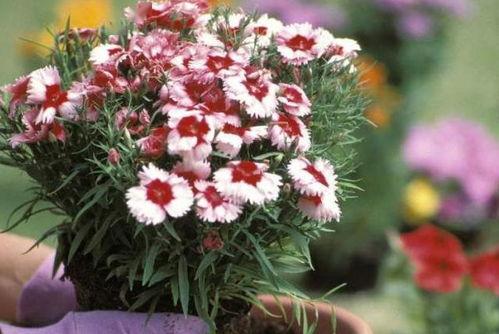 仿照养花写一篇养植物的作文300字