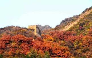 惊艳北京最美的季节来了