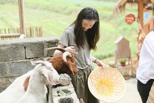 baby倪妮做客向往的生活尽显女子力,一个劈柴一个喂羊
