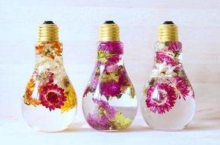 灯泡里面养花