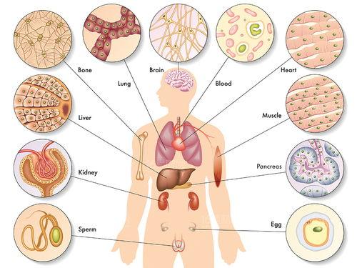 在中医里,心、肝、脾、肺、肾这五脏不仅仅是身体器官,更是人体养生的最终落脚点.