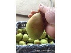 陕西砀山酥梨价格 酥梨批发价格 酥梨产地价格 香梨价格
