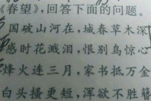 古诗春望的名句