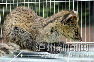 《剑雨江湖》灵猫怎么开启?
