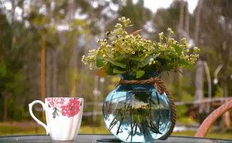爱养花的名族有哪些