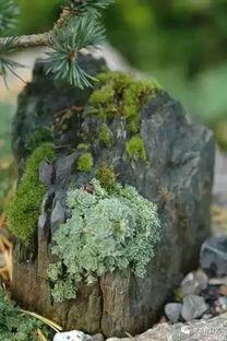 养花底下放啥样的石头