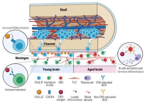Science:科学家鉴别出细胞生长过程中感知营养可用性的关键营养传感器