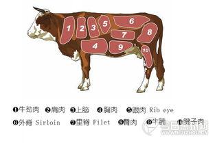 教你吃出最适合你的牛排