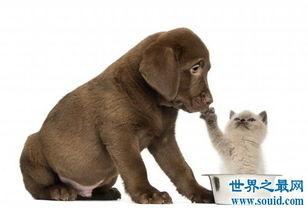 狗的寿命是多久 不同种类的狗有着不同的寿命时长
