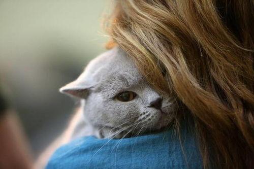 罗马尼亚首都布加勒斯特猫咪选美