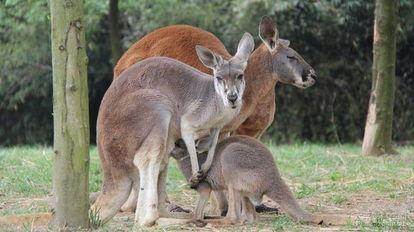 杭州野生动物世界门票杭州野生动物世界门票价格杭州野生动物世界门票团购杭州野生动物世界旅游攻略