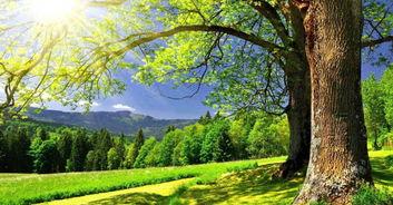阳光明媚的春天类似的词语