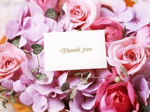 情人节粉红玫瑰清纯花瓣贺卡感谢祝福图片