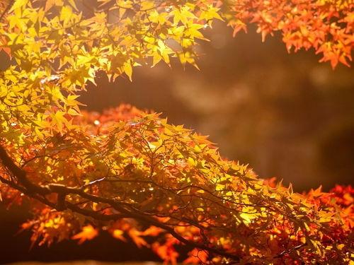 描写秋天的浪漫句子
