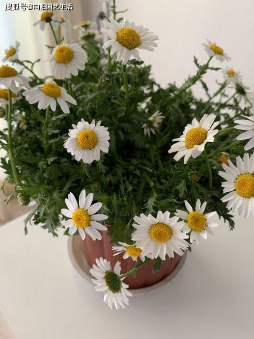養花的作者中心句