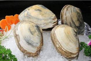 河蚌肉怎么处理河蚌肉好吃吗 致富热