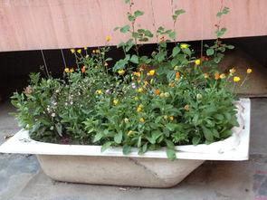 浴缸改造成养花