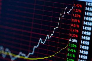 002806股票分析
